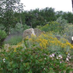 Aromatiche varie_ rosmarino, cappero, santolina, elicriso, ruta