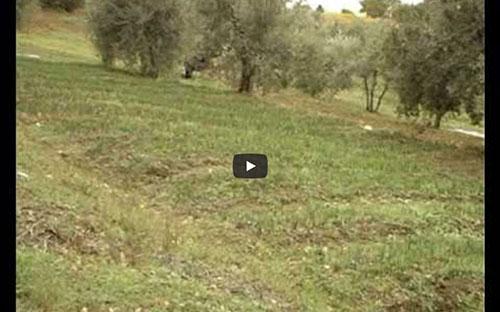 bigoncia 1 Agriturismo Il Castagolino