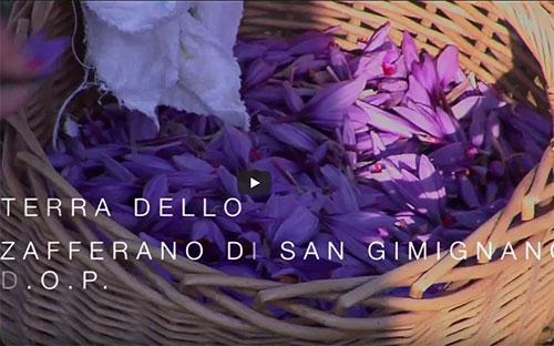 San Gimignano, terra della Vernaccia DOCG e …